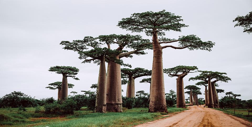 Madagascar2_CC0 (1)